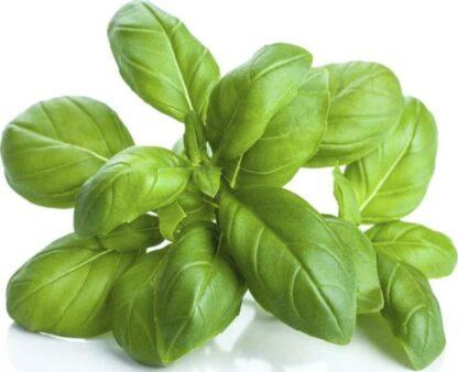 Базилік зелений (імпорт), кг